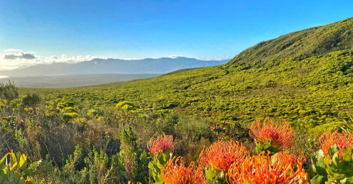 Fascinated by fynbos